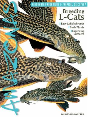 AMAZONAS Breeding L-Cats