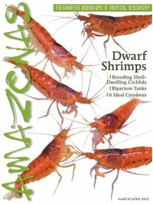 AMAZONAS Dwarf Shrimps