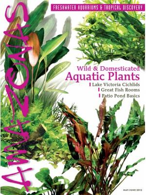 AMAZONAS Aquatic Plants