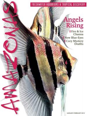 AMAZONAS Angels Rising