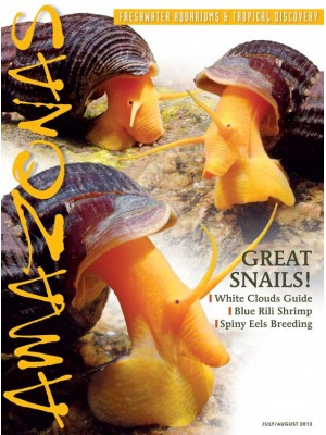 AMAZONAS Great Snails