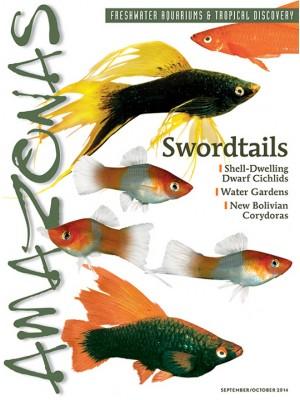 AMAZONAS Swordtails!