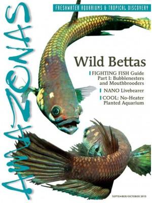 AMAZONAS Wild Bettas