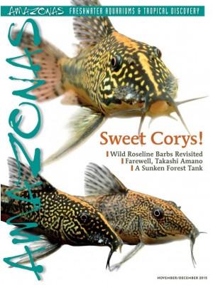 AMAZONAS Sweet Corys!