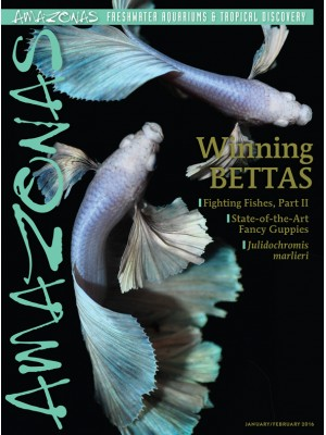 AMAZONAS Winning Bettas