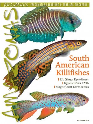 AMAZONAS South American Killifishes
