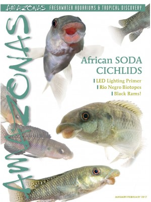 AMAZONAS CiCHLIDS