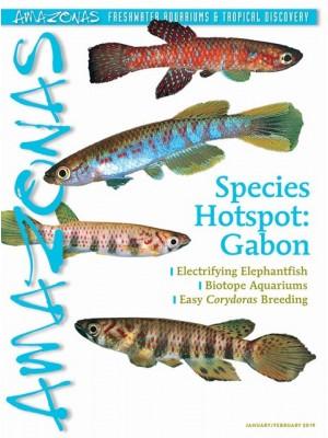 AMAZONAS SPECIES HOTSPOT: GABON