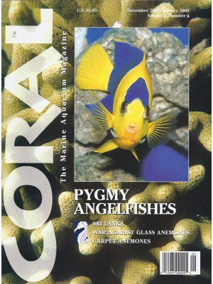 Pygmy Angelfishes