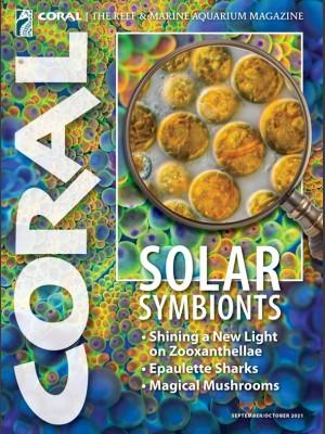 Solar Symbionts