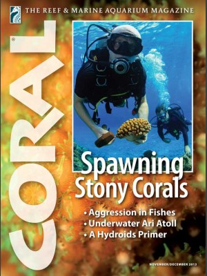 Spawning Stony Corals
