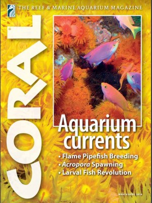 Aquarium currents