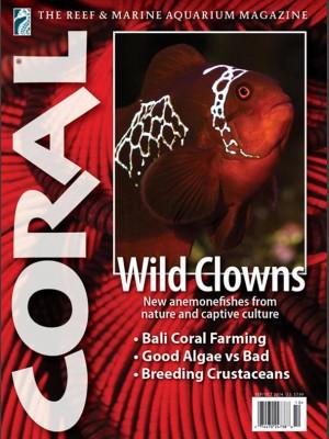 Wild Clowns