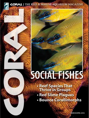 Social Fishes