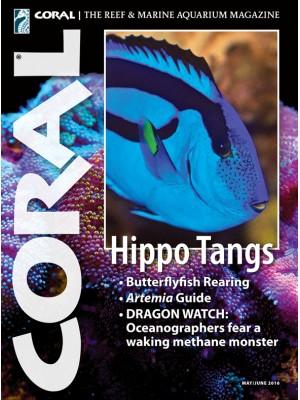 Hippo Tangs