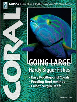 Going Large, Hardy Bigger Fishes