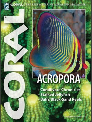 Acropora