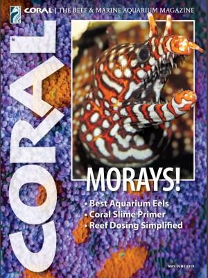Morays!