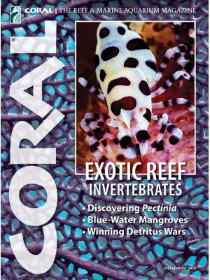 Exotic Reef Invertebrates