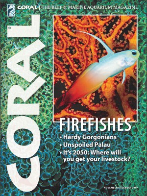 Firefishes