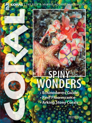Spiny Wonders