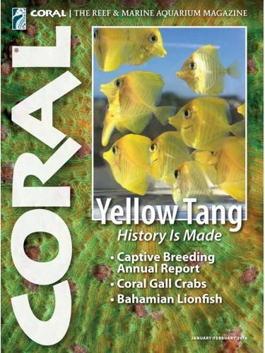 CORAL Yellow Tang