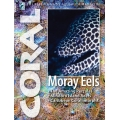 CORAL Moray Eels