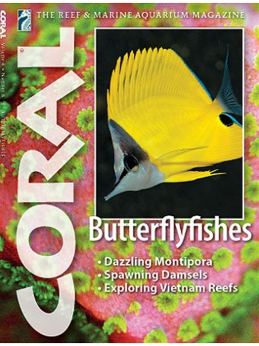 CORAL Butterflyfishes