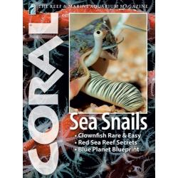 CORAL Sea Snails
