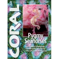 CORAL Pygmy Seahorses