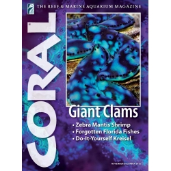 CORAL Giant Clams