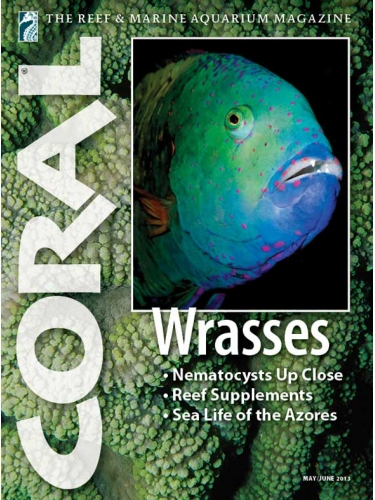 CORAL Wrasses