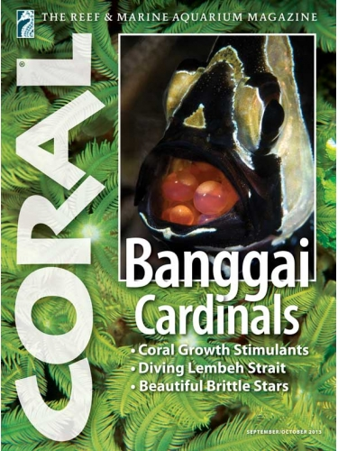 CORAL Banggai Cardinals