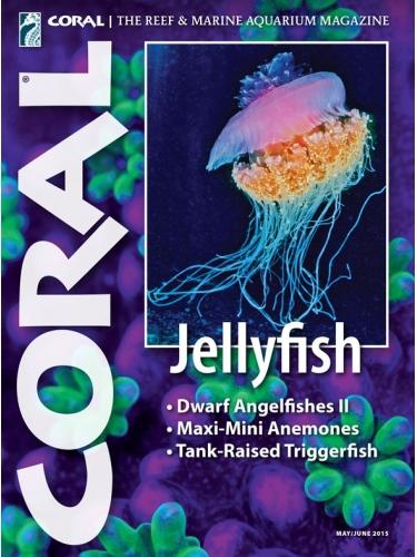 CORAL Jellyfish