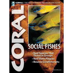 CORAL Social Fishes