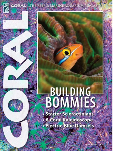 CORAL Building Bommies