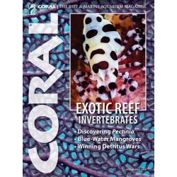 CORAL EXOTIC REEF INVERTEBRATES