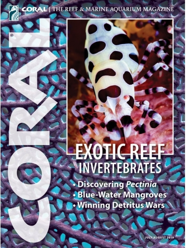 CORAL EXOTIC REEF INVERTEBRATES