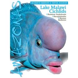 AMAZONAS Lake Malawi Cichlids