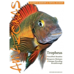 AMAZONAS Tropheus