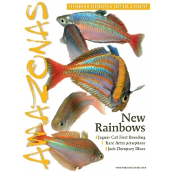 AMAZONAS New Rainbows