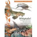 AMAZONAS Whiptails