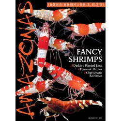 AMAZONAS Fancy Shrimps