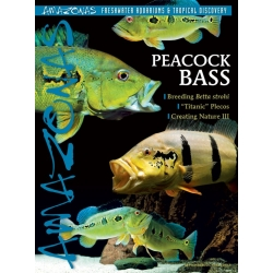 AMAZONAS Peacock Bass