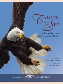 Talons in the Sky
